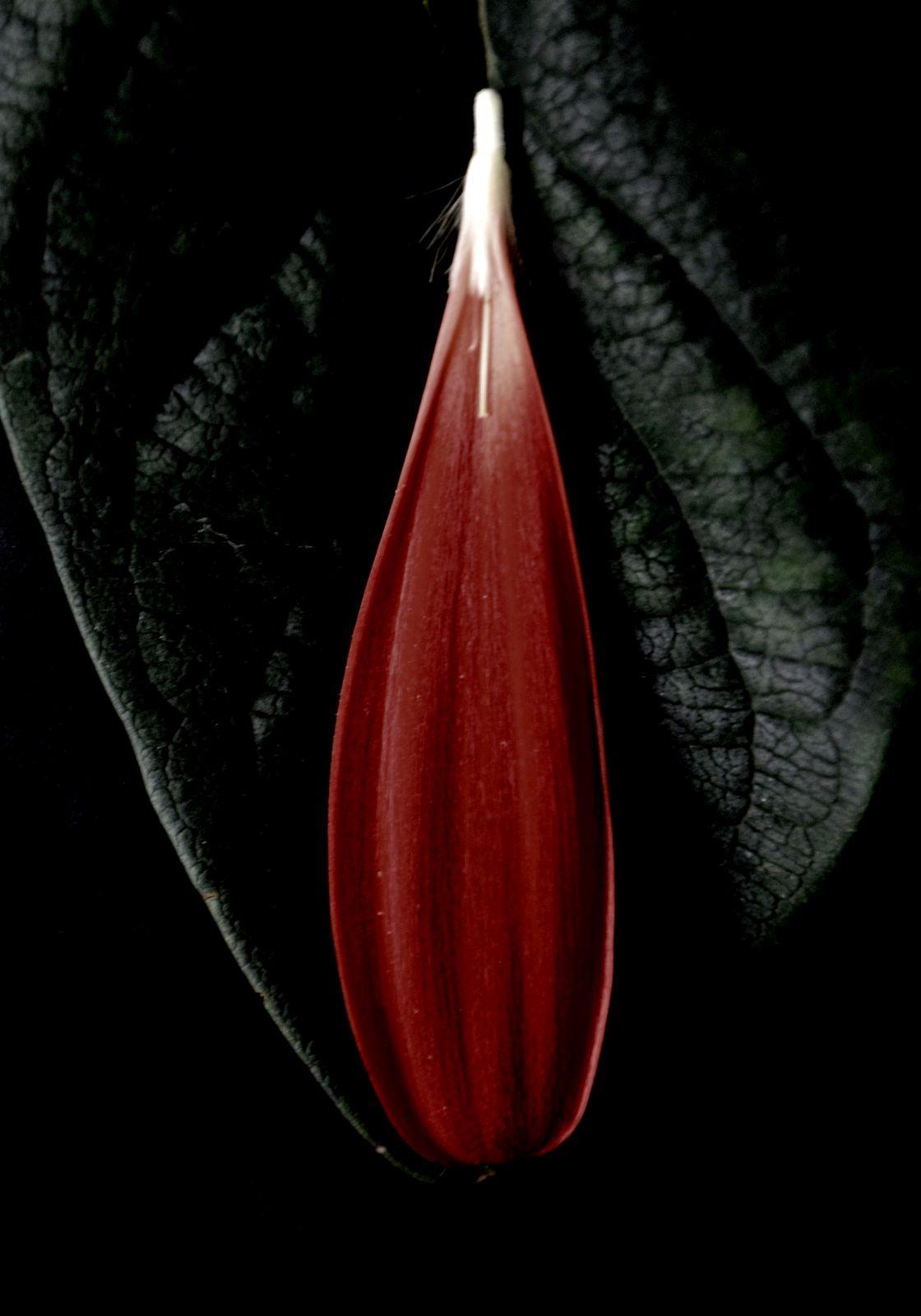 Cose di natura, Nature's Matters #13, Petalo e foglia/Petal and Leaf, 2012