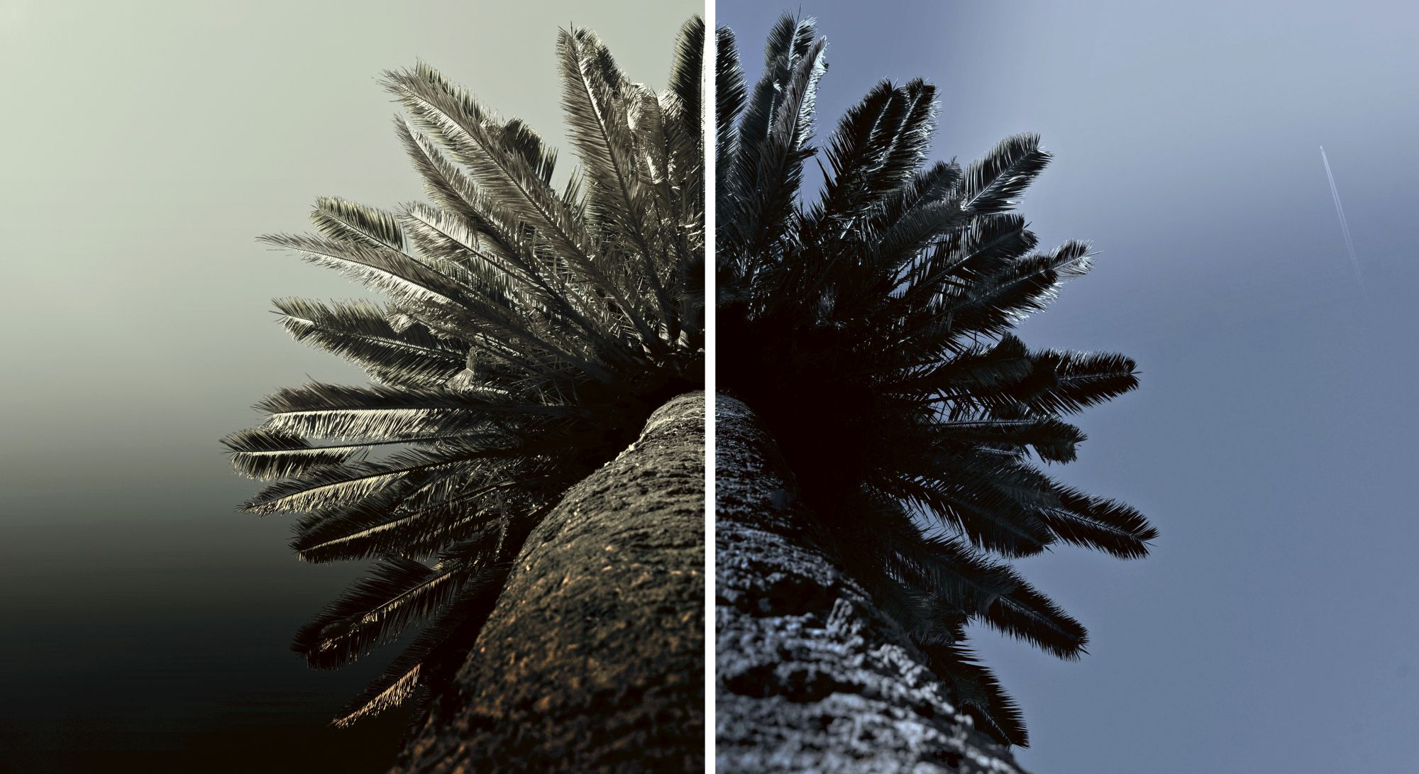 Cose di natura, Nature's Matters #14, Palma/Palm, 2014