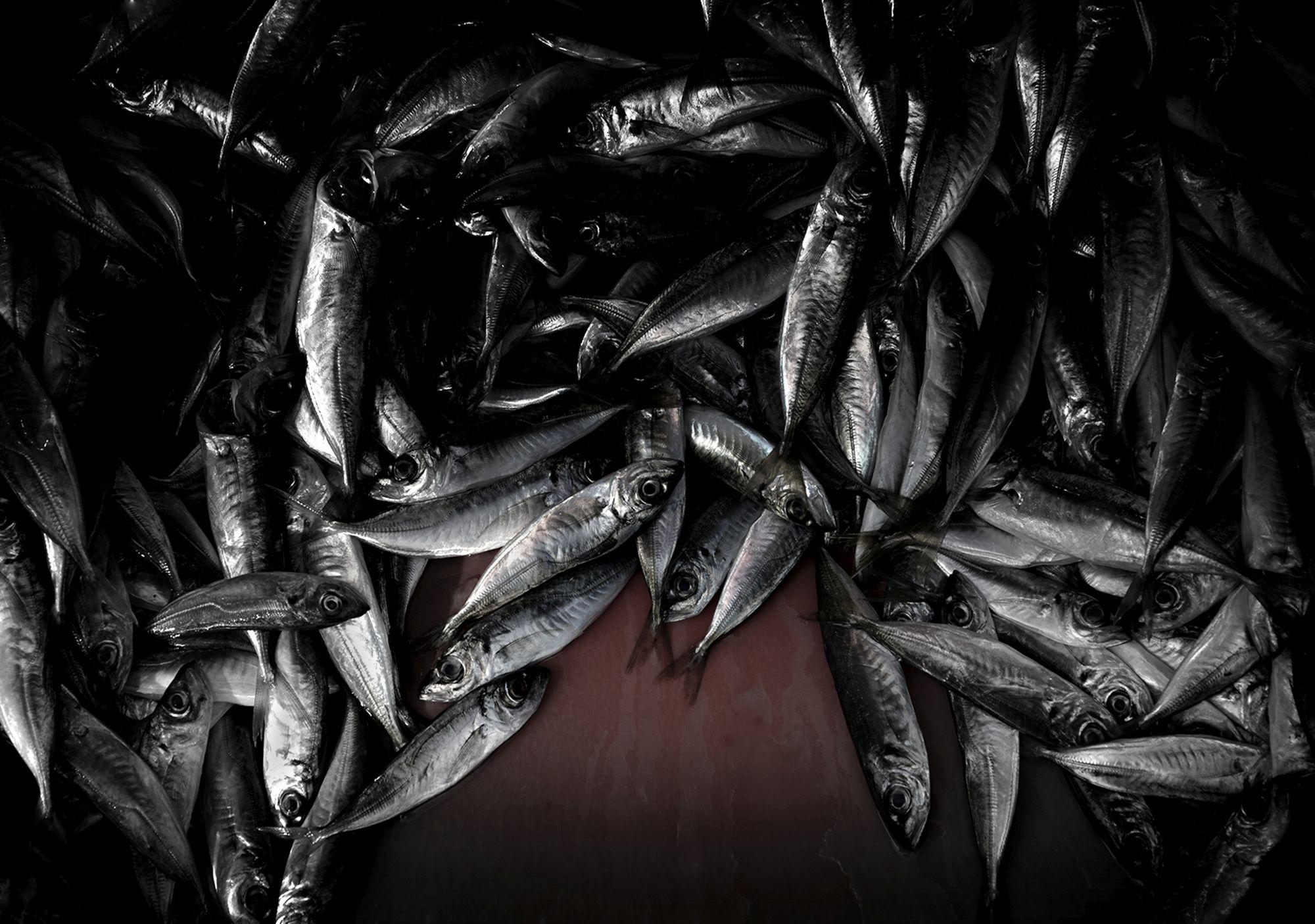 Cose di nature, Nature's Matters #5, Pesci/Fish, 2014