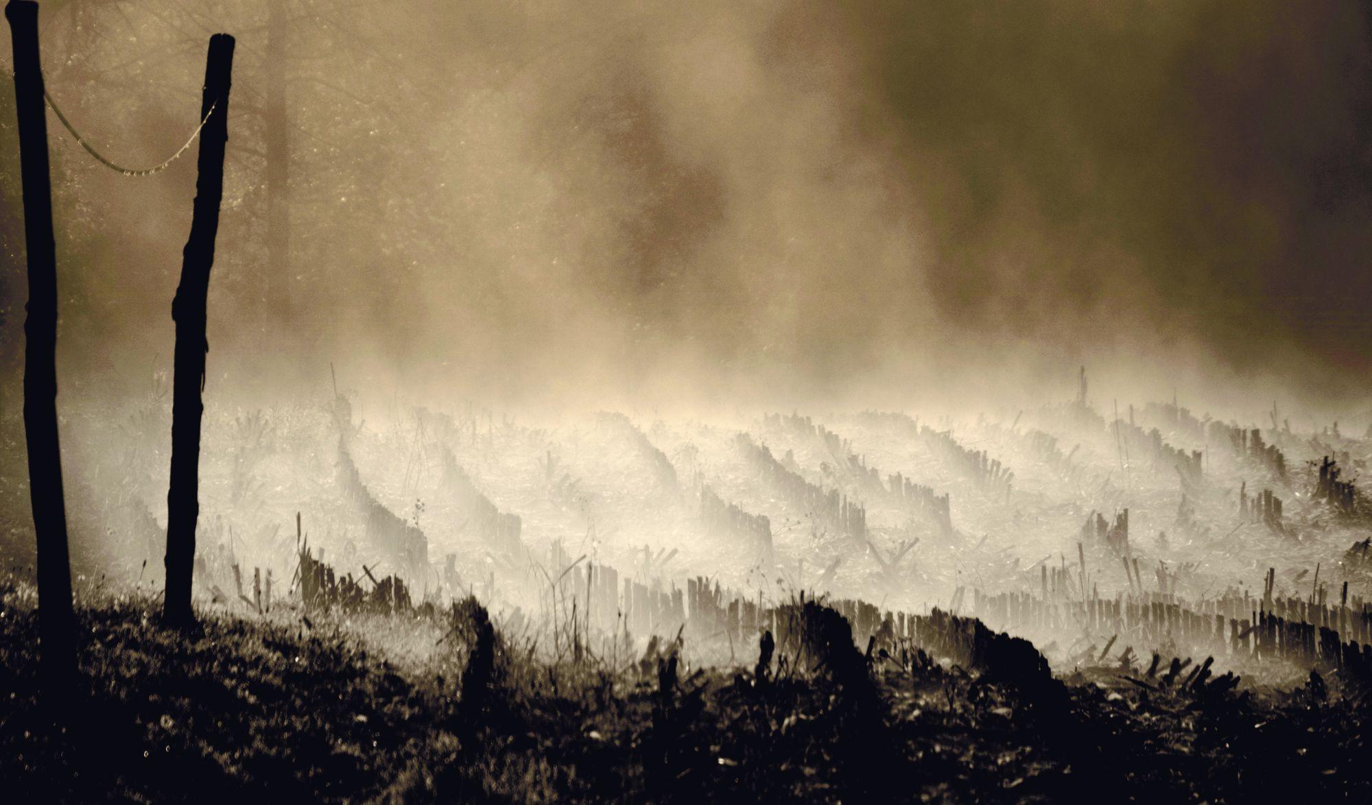 Cose di natura, Nature's Matters #7, Campo/Field, 2012