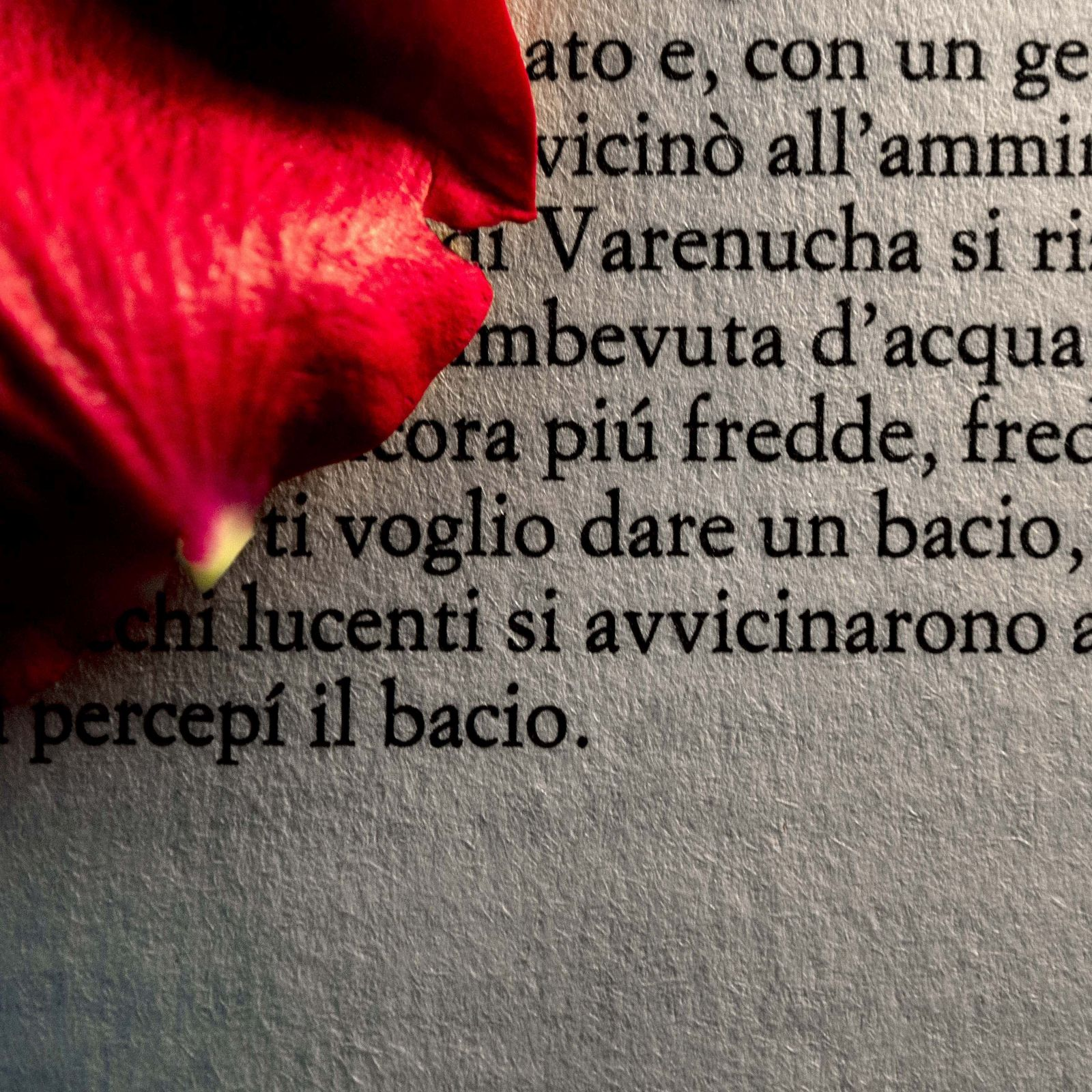 Words #28, Romanzo d'amore/Romance, 2013